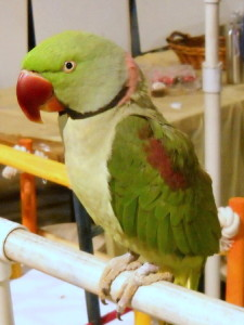funkyparrot